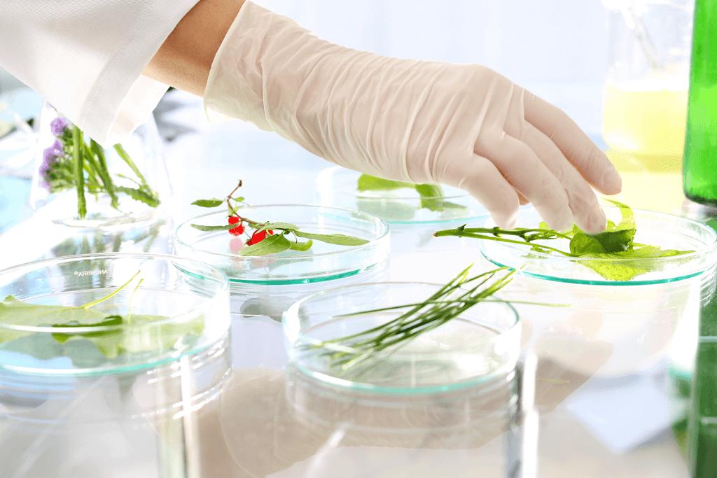 基因改造食品檢驗分析