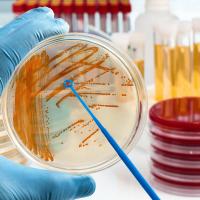 糞腸球菌屎腸球菌限制使用