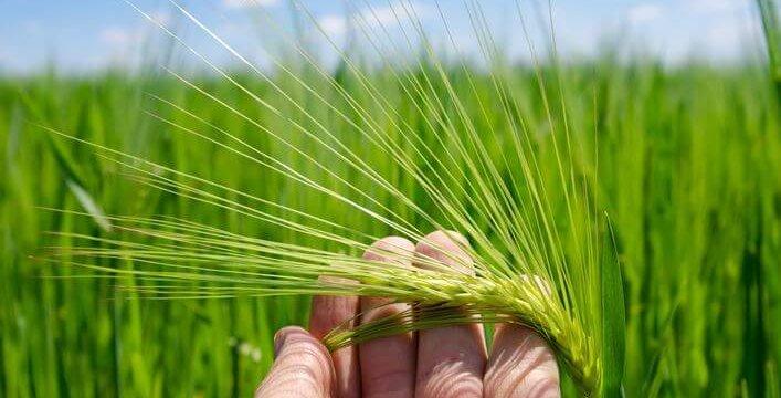 什麼是農藥半衰期?如何評估和確認農藥半衰期?