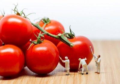 食品中微生物衛生標準草案