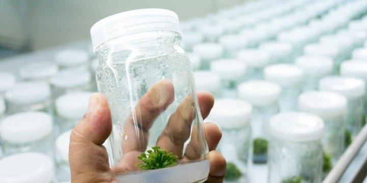 農藥殘留檢驗增至380項
