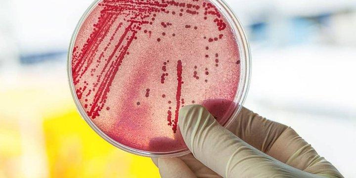 微生物實驗室品質管理師