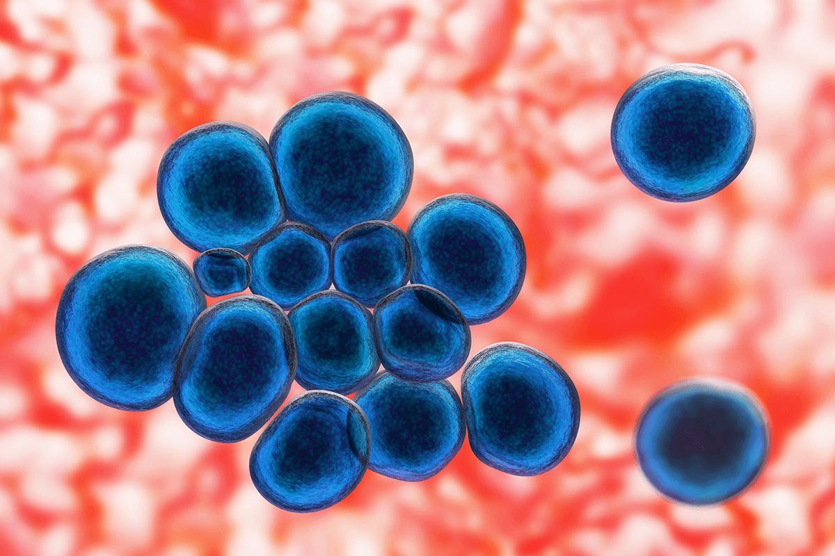 黴漿菌試驗 (Mycoplasma)